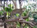 Belize Zoo - Junior Buddy